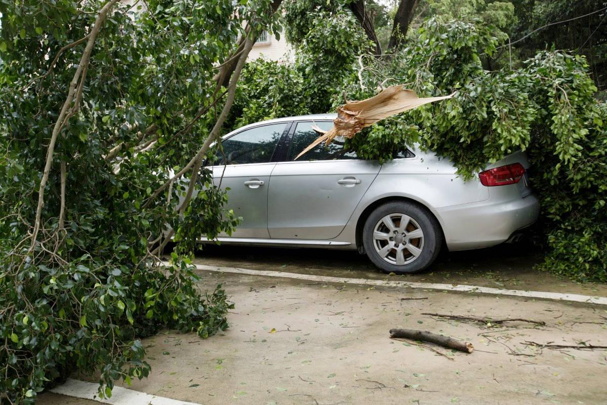 Risarcimento danni auto per la caduta di un albero